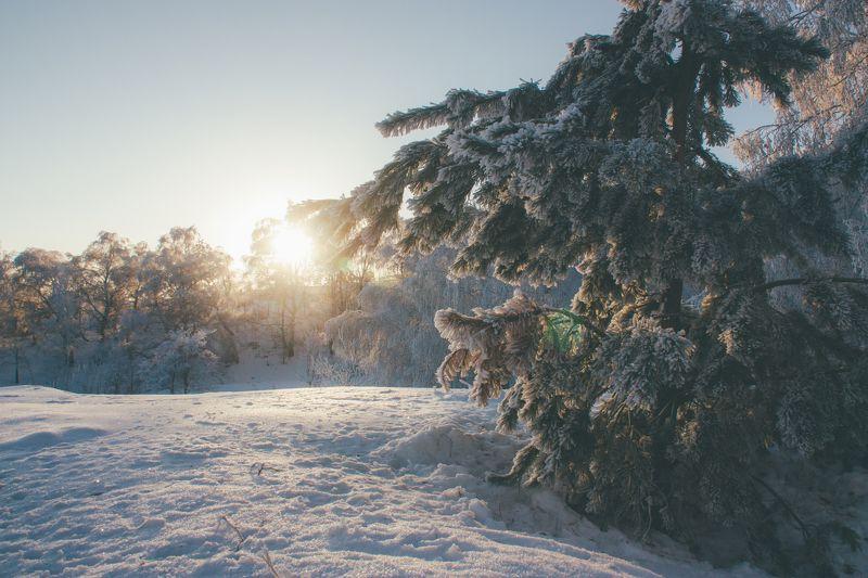 пейзаж, лес, зима, рассвет Утро в лесуphoto preview