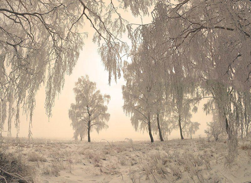 зима, иней, снег, мороз, зимняя, березы, пейзаж, поле, утро, солнце, свет, деревья, лес, опушка, туман \