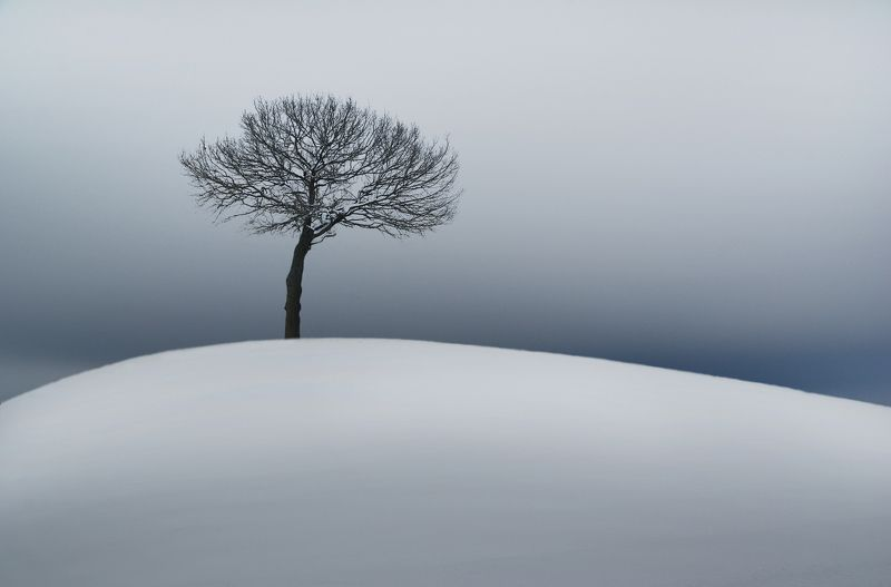 winter, tree, snow, sky, clouds *photo preview