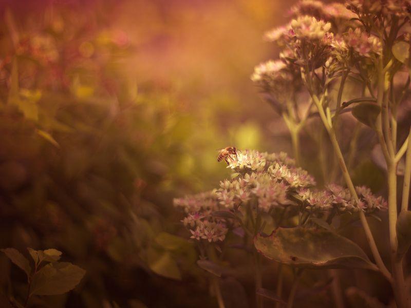summer lightphoto preview