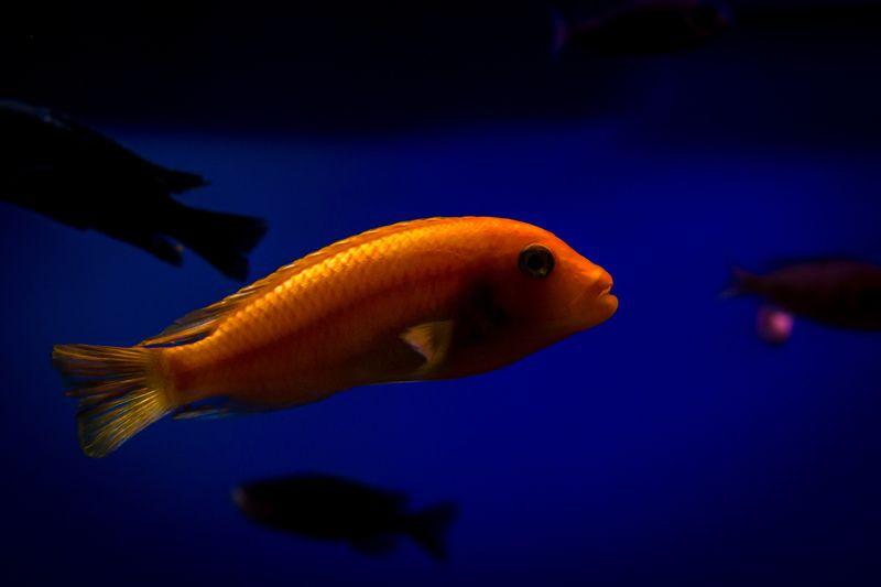 fish, macro, water among shadowsphoto preview