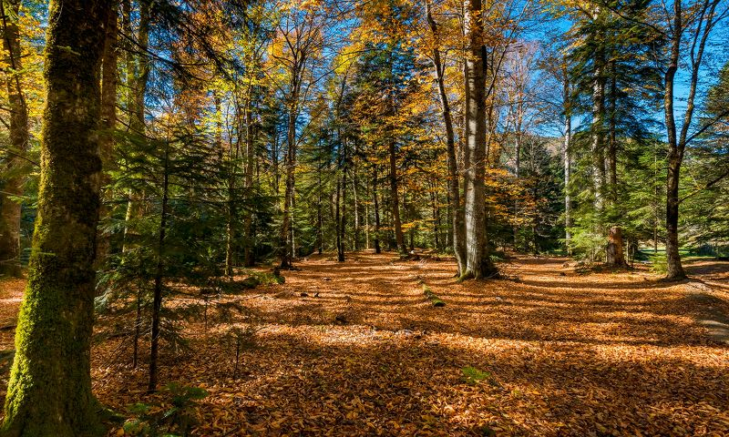 Про осень в Гузериплеphoto preview