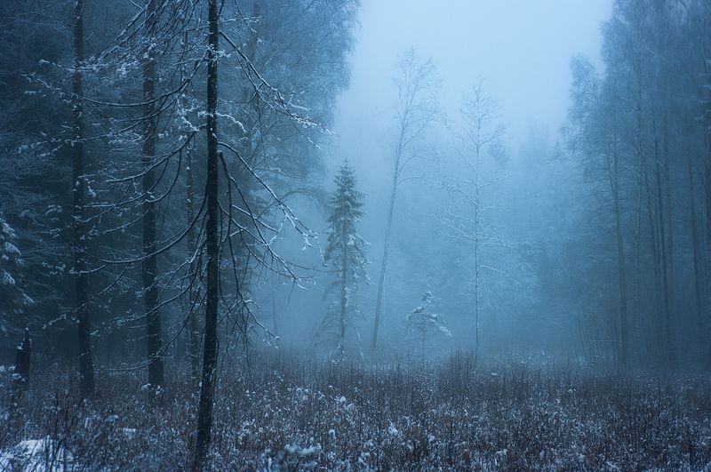 Silent winterphoto preview