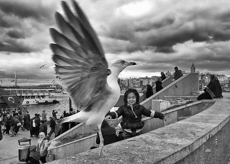 street, black and white, istanbul,seagull feeling of flyingphoto preview