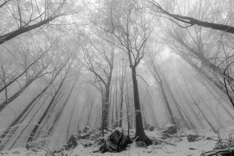 forest,winter,trees,snow,mist,fog, Into the forestphoto preview