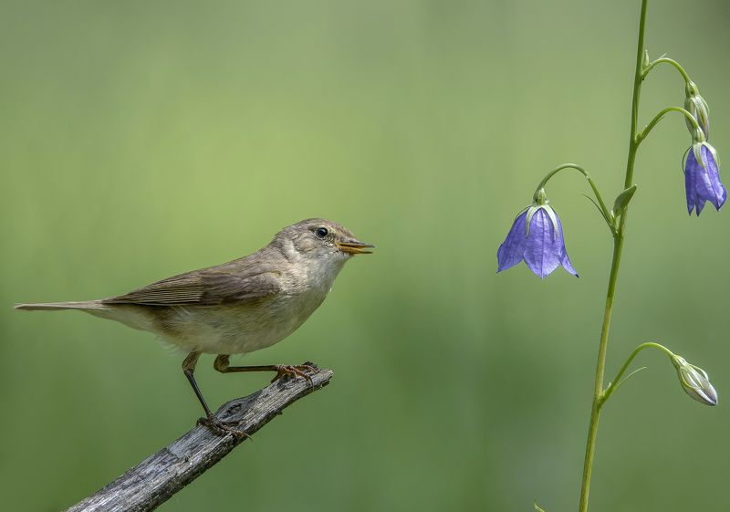 птицы,природа,лето Позвонить что ли...?photo preview