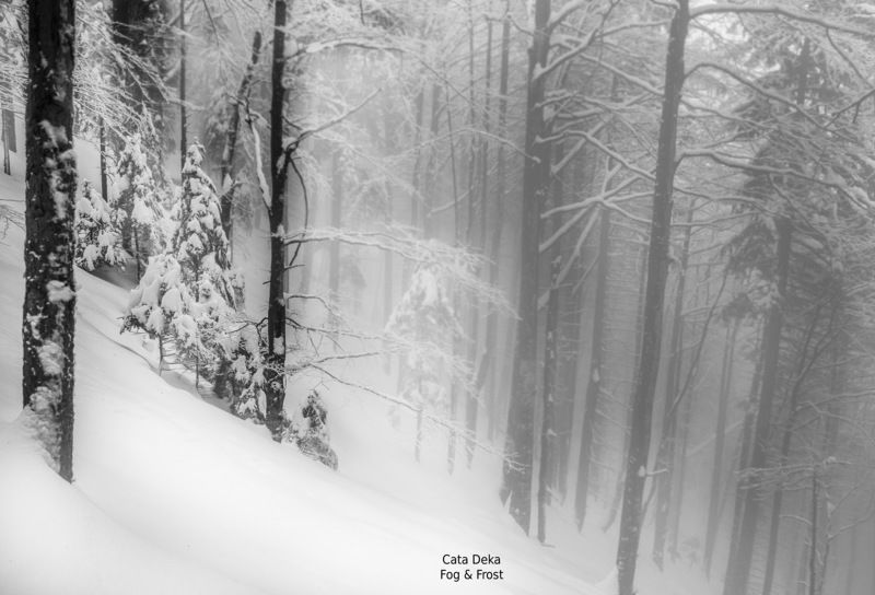 Fog & Frostphoto preview