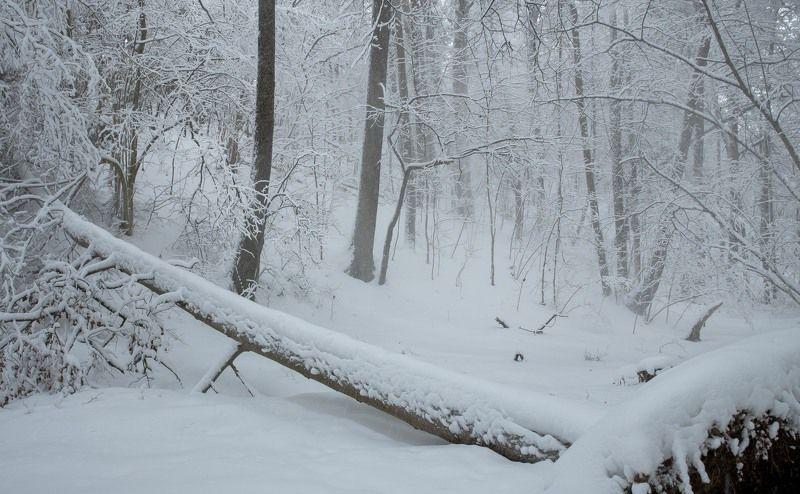 зима, снег, много снега, зимняя сказка, заснеженный лес, белый, москва река, николина гора Десяточек минут зимней сказкиphoto preview