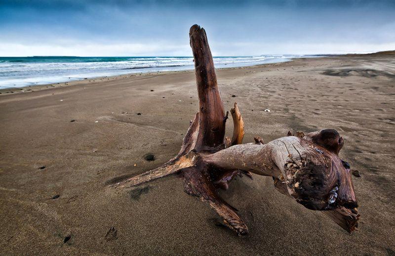 коряга, дерево, остров беринга, пляж, лайда, океан, тихий океан Коряга, просто корягаphoto preview