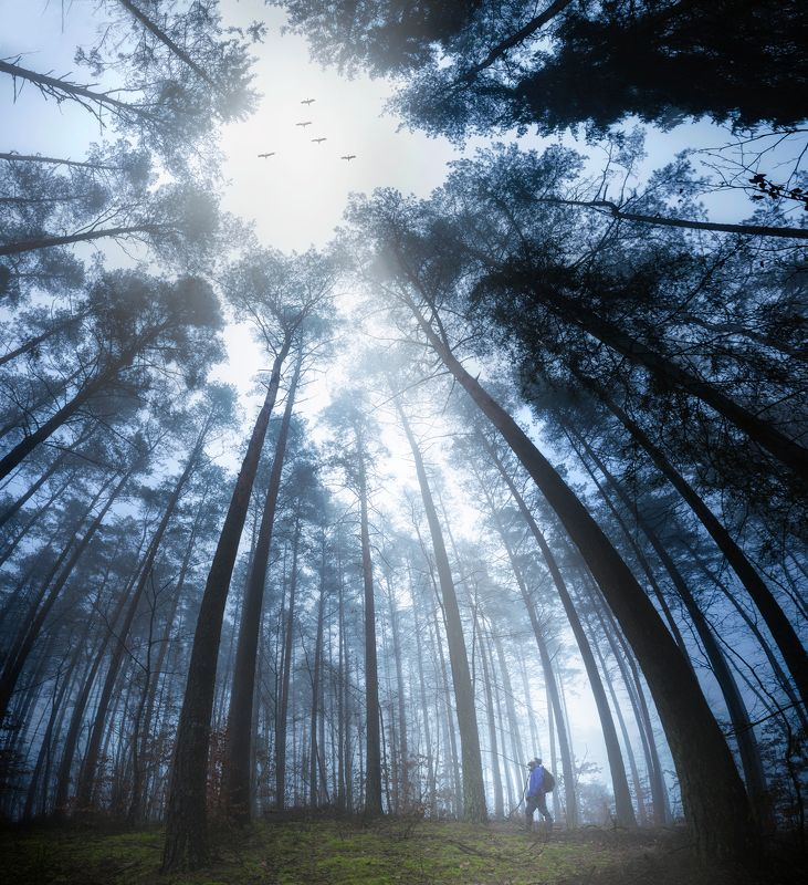 spring, forest, fineart, cranes, birds, landscape, poland, fog , foggy ,man , silhouette, backpacker Spring is comingphoto preview