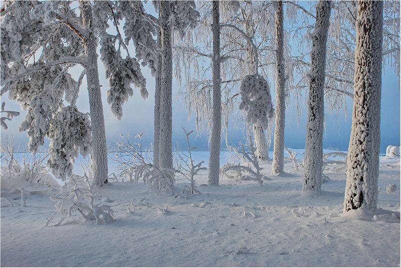 Снежное безмолвие...photo preview