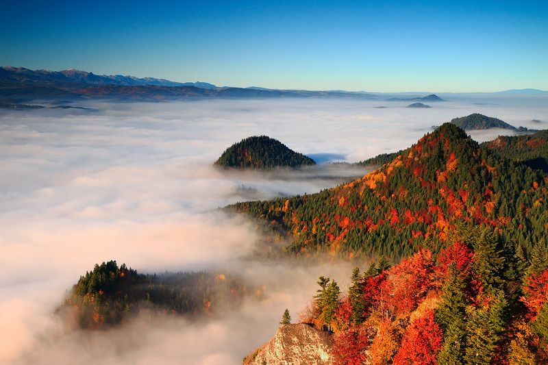 autumn, mountains, morning, sunrise, fog, color, trees, pieniny, tatry, Autumn in the mountainsphoto preview