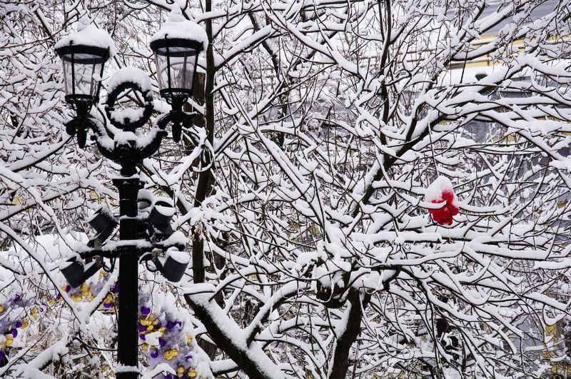 Москва, снег, фонарь, Тверской бульвар, зима, город Тверской бульвар зимойphoto preview