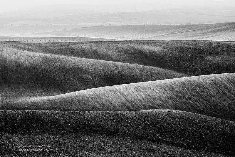 Morawy w czerni i bieliphoto preview