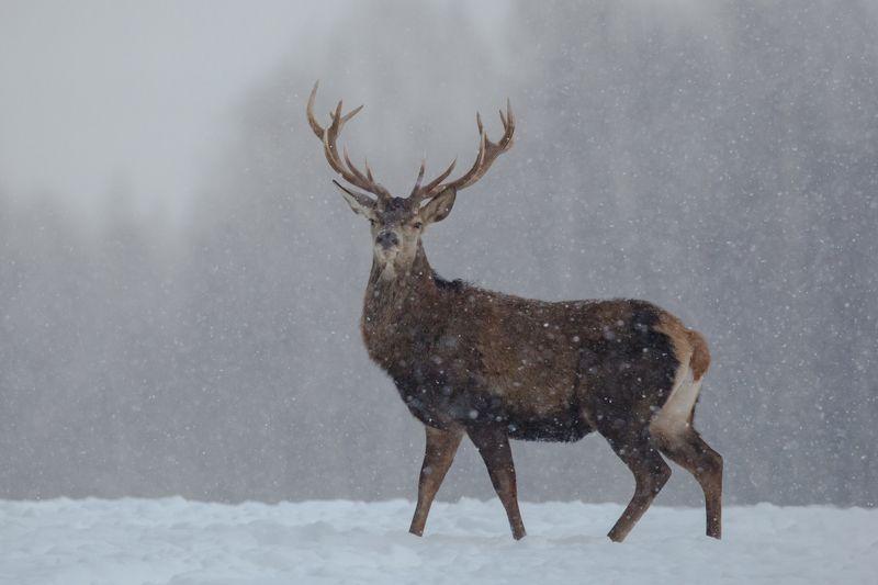 В снегопад.photo preview
