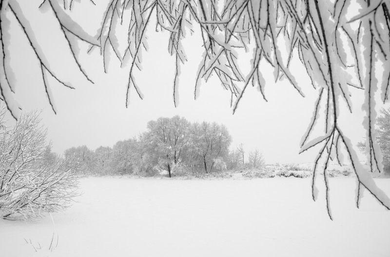 чб, чёрно-белое фото, зимний пейзаж, зимняя сказка, ветви, ветки, снег, москва река, николина гора, зима, январь, 2018 год, белый, графика, русская зима Русская зимаphoto preview