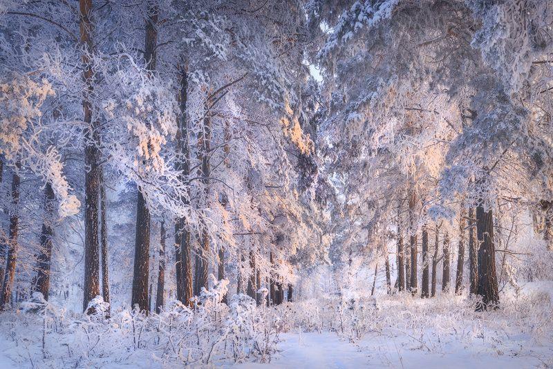 лес, зима, мороз, солнце Сердце Зимыphoto preview
