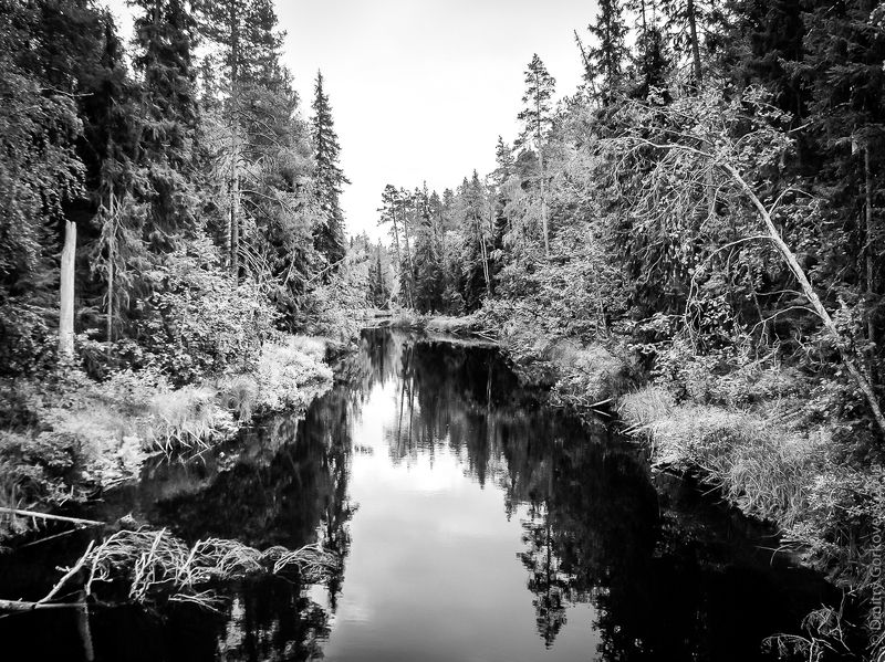 #PhotoByDmitryGorkovets #stream #forest #bridge #russia #karelia Unknown stream. Неизвестный ручей. Россия, Карелия.photo preview