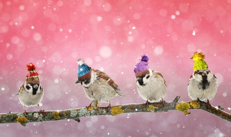 пришла настоящая зимаphoto preview