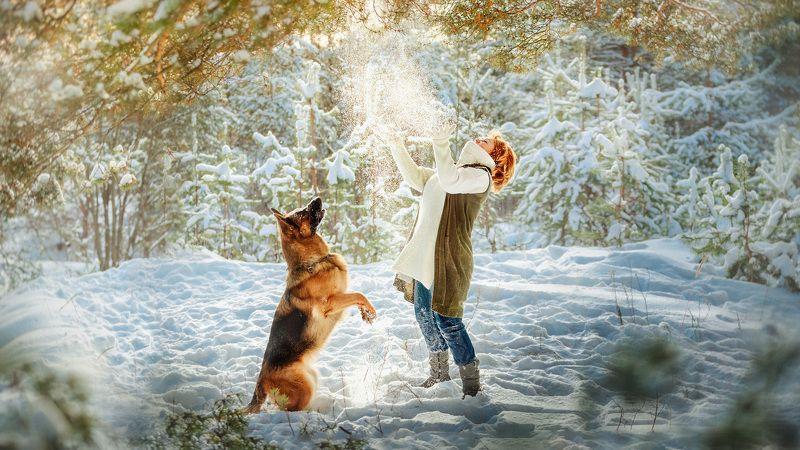 собака, немецкая овчарка, порода, друзья, зима, природа Игра с солнцем и снегомphoto preview