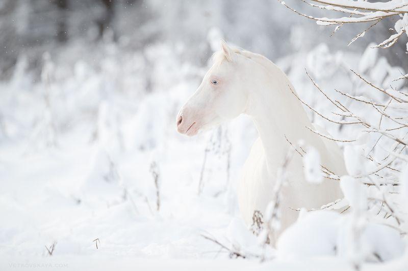лошадь, зима, снег, белый, пони Ванильный пломбирphoto preview