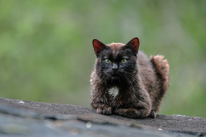 кот,ёж,мышь,полёвка,фото,история,деревня,природа рядом с домом,вечер,чёрная кошка,ёжик Ситуация на районе =)photo preview
