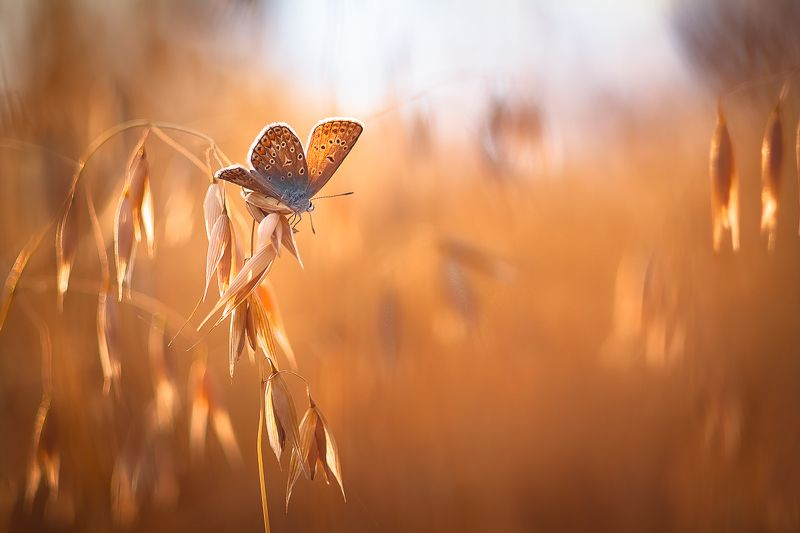 butterfly, nature, summer Summer talesphoto preview
