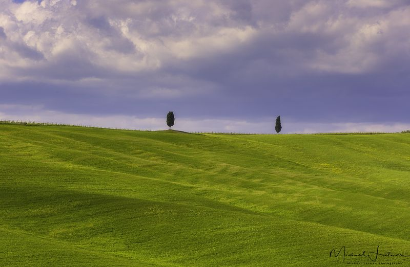 Two cypresses story...photo preview