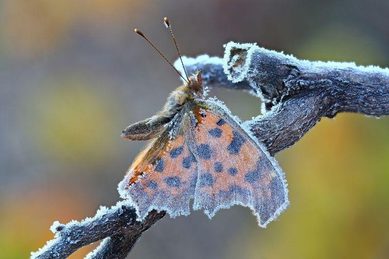 бабочка замерзла в страной позе Quick-freezephoto preview