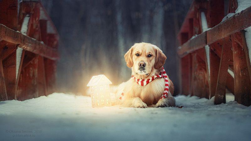 собака, зима, ожидание, свет, снег, мост photo preview