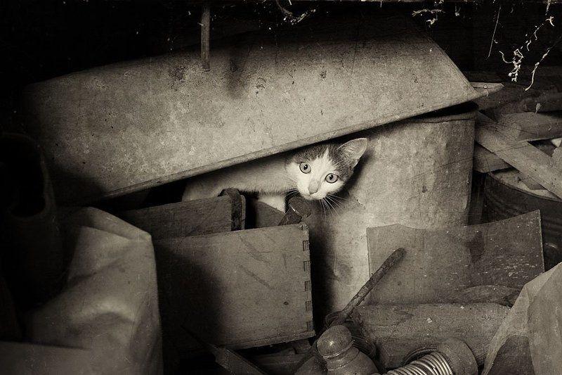 чердак, киса Заброшенный дом..photo preview