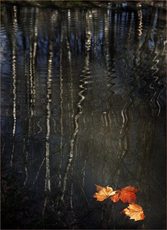 парки , осень, листья Последние швартовыеphoto preview