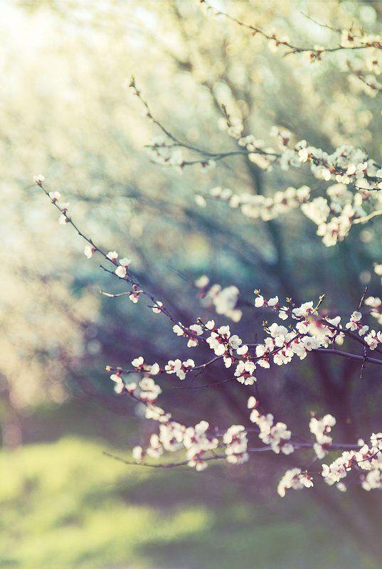 весна, апрель, деревья, цветы Апрельphoto preview