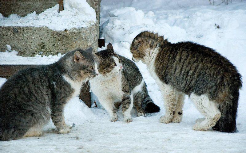 животные, кот, котофото, тарас островский, людиphoto preview