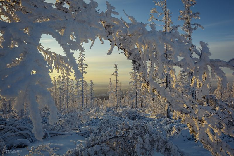 зима, снег, иней, природа, закат, мороз, холод, якутия, саха, нерюнгри Сахарный лесphoto preview
