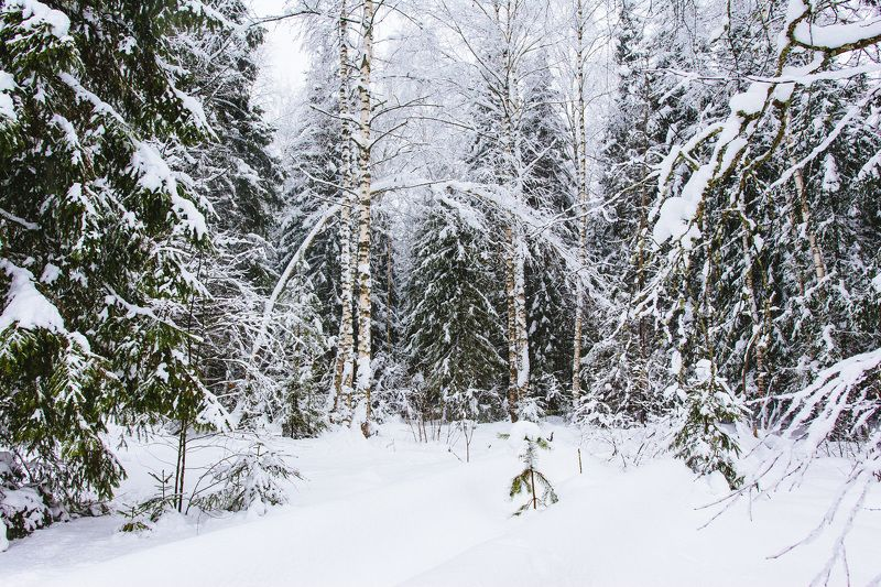 природа, пейзаж, зима, снег, деревья, лес В зимнем лесуphoto preview