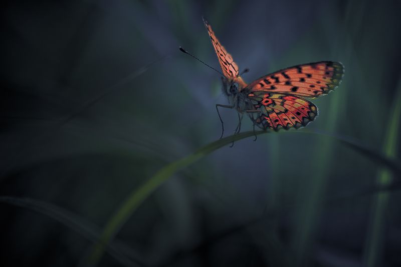 butterfly, nature Out of shadowphoto preview
