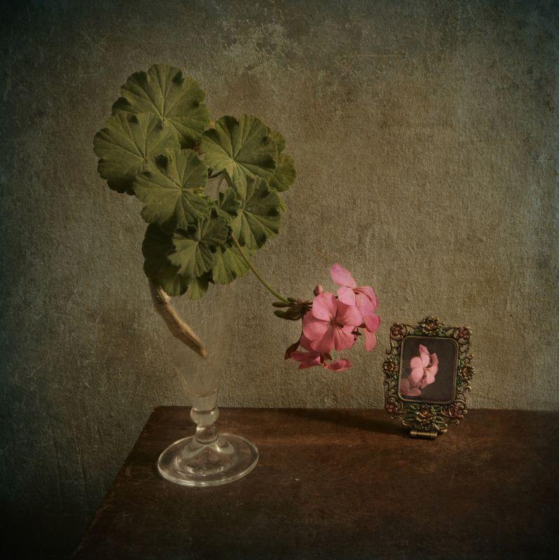 geranium, flower, vase, glass, green, pink, mirror Geraniumphoto preview