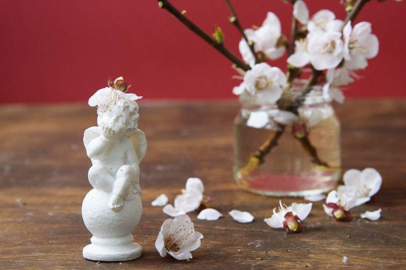 весна, цветы, ангел, любовь, нежность, цветущая вишня, белые цветы Веснаphoto preview