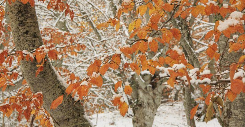 Первый снег в горахphoto preview