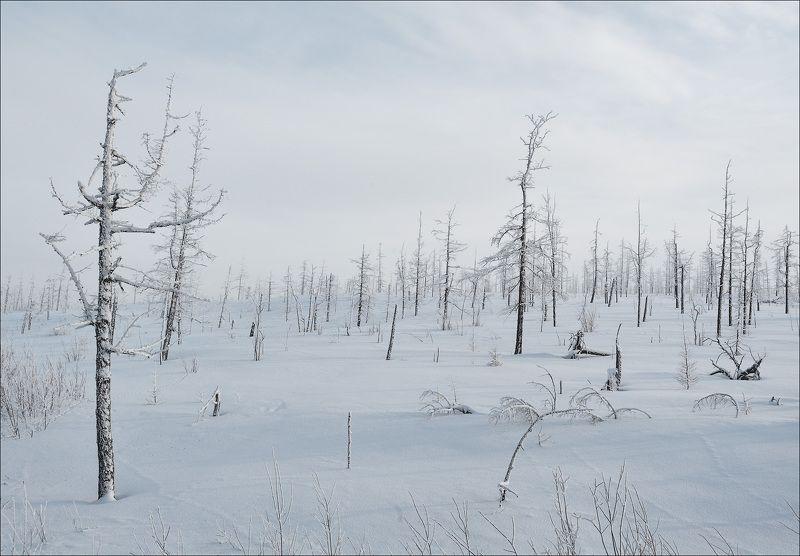 Северная пустыняphoto preview