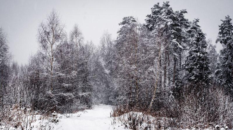 зима, снег, лес, деревья, дорога, пейзаж, природа Зимаphoto preview