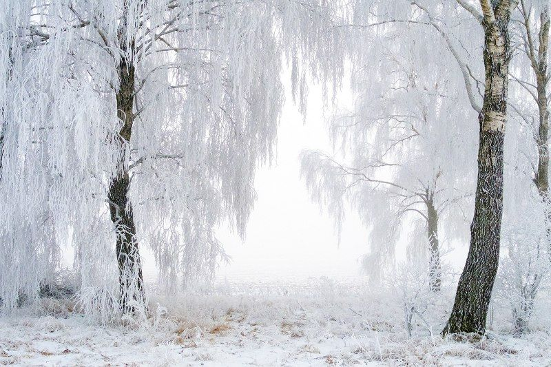 зима, снег, иней, березы, мороз, winter, frost, snow, trees Зимняя сказкаphoto preview