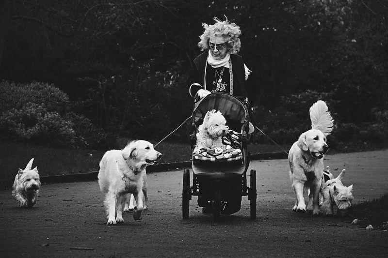 Про собак и людей / Dogs and Peoplephoto preview