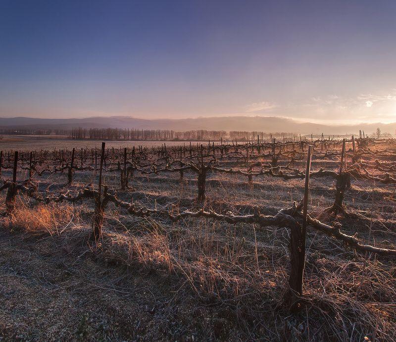 Февральское утро на виноградникахphoto preview