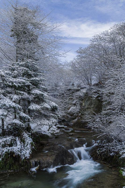 forest,river,switzerland,long eposure,tree,winter, В лесуphoto preview