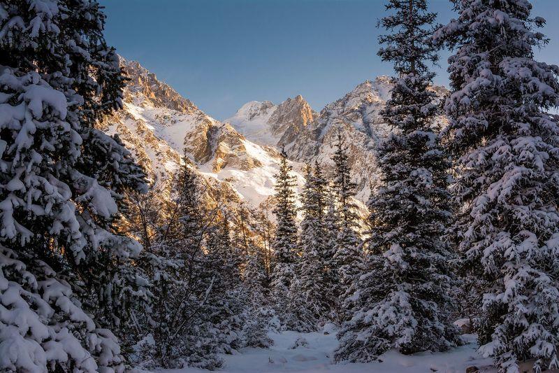 горы, природа, вечер, закат, снег, ели, природа, пейзаж, зима Зима в горахphoto preview