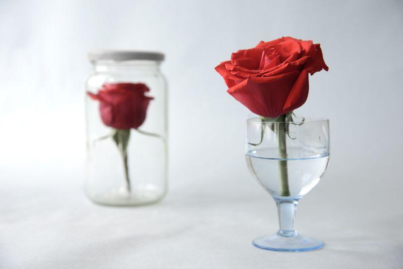 розы, жизнь, судьба, любовь, цветы, натюрморт с розами Судьба розphoto preview