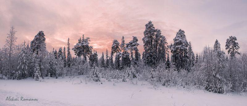 закат, север, природа, лес, вечер На исходе дняphoto preview