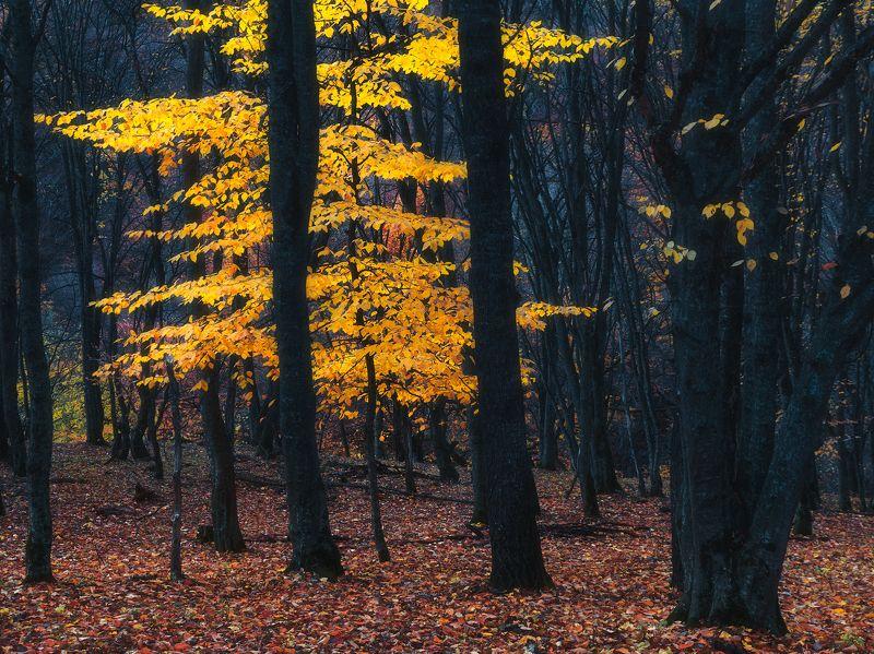 В лесах Карачаево-черкесииphoto preview
